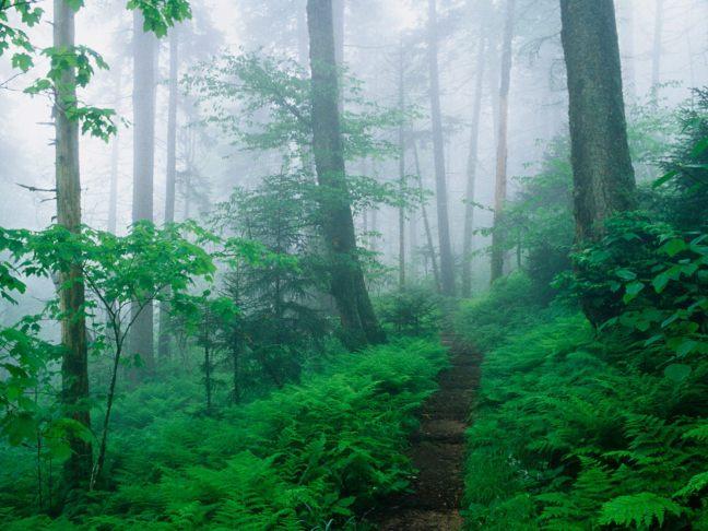 Appalachian Trail, Smoky Mountains National Park, Tennessee