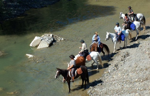 horses-at-river-edge
