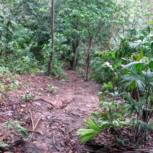 Jungle_path_in_the_Darién_Gap