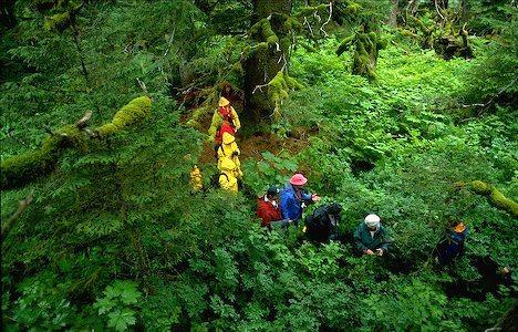 Eco tourism in Alaska