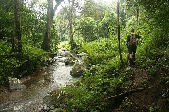 hiking-woods