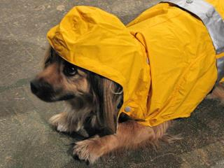 backpacking_rain_gear_for_dog